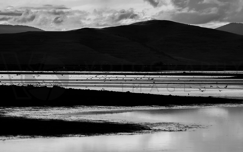 Waterfowl at Sunset, Mission Valley, Montana - monochrome