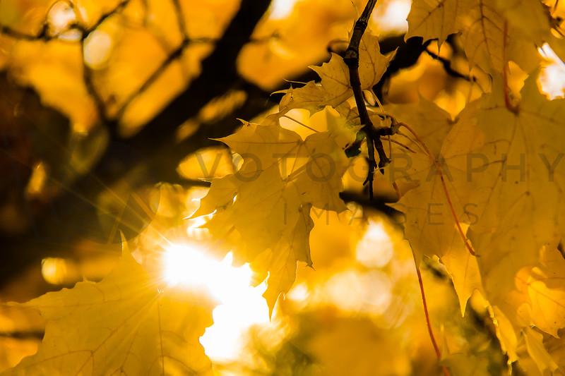 Autumn Colors and Sunshine
