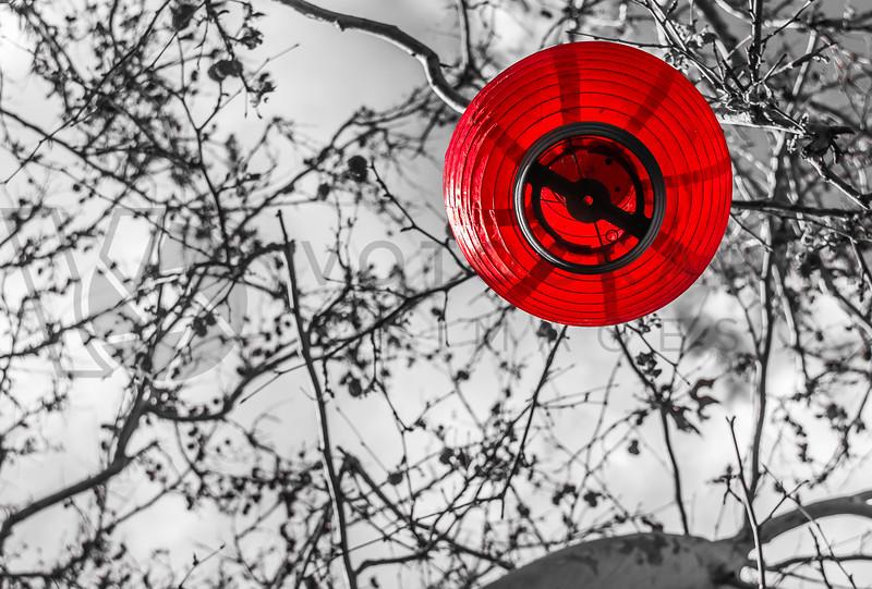 Red, Chinese Lantern, Sedona, Arizona