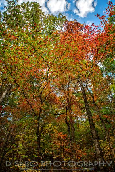 3 Tree Autumn Trees