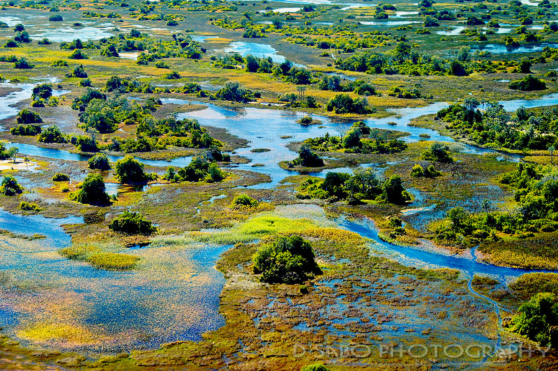 Okavango Springtime
