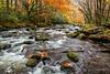 Smoky Autumn Wonderment