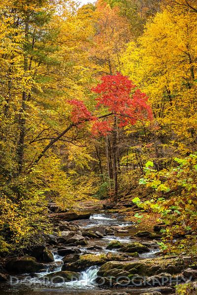 Autumn's First Blush
