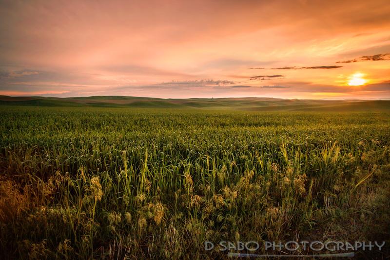 Sunrise Fields