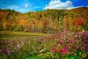 Meadow Wonderland