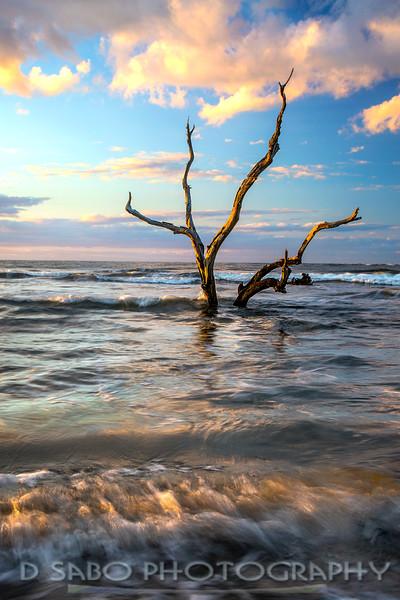 Capers Island Zen