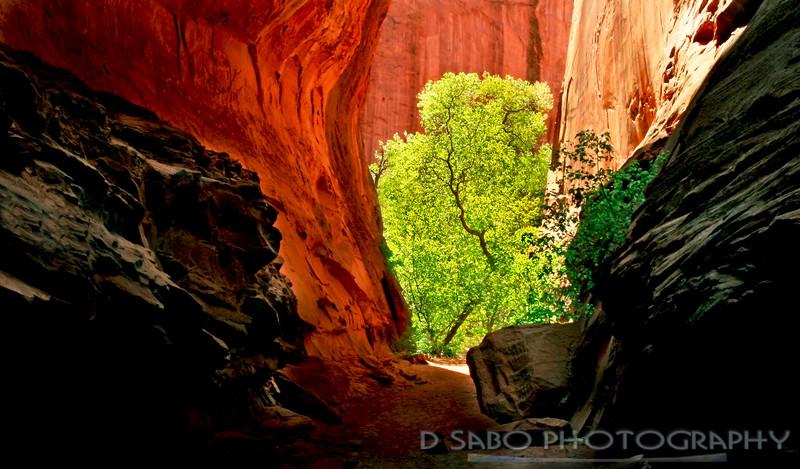 Slot Canyon Springtime