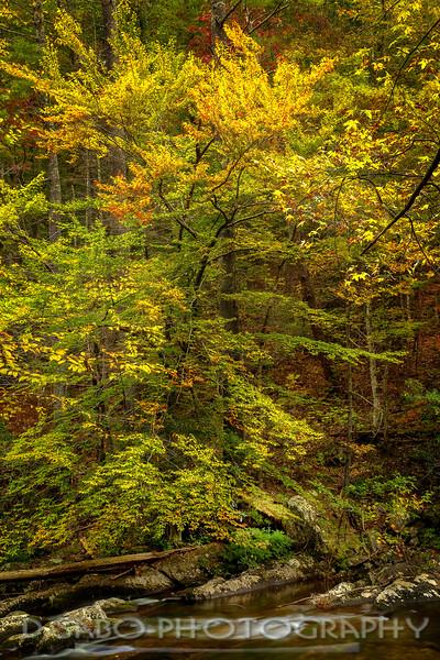 A Citico Autumn