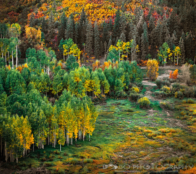 Colorado Meadow Basin
