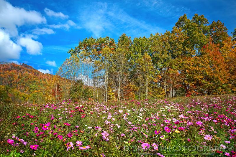 Hot Springs Wildflowers