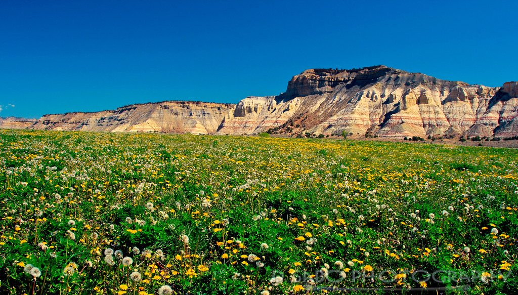 Kodachrome Basin Wildflowers