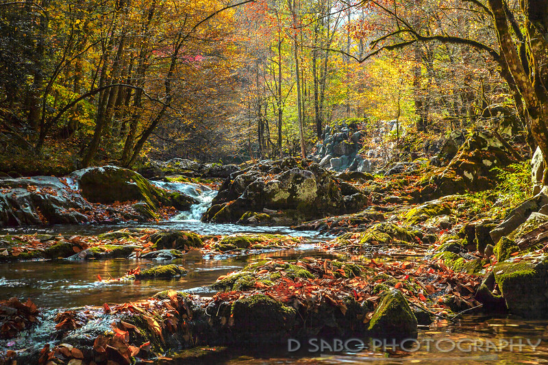 Autumn in Middle Prong