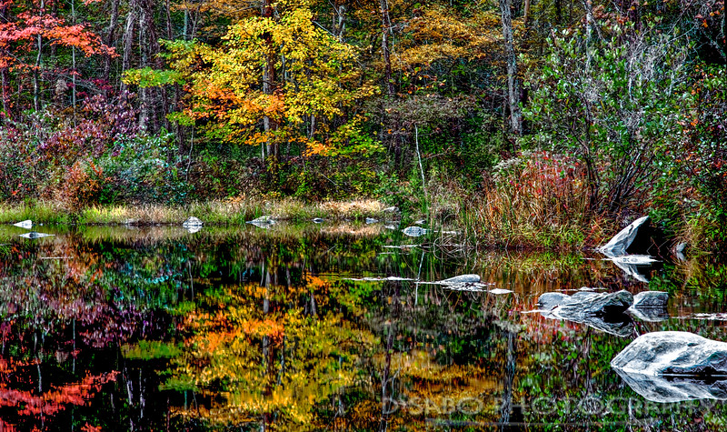 Cherokee National Forest Reflections