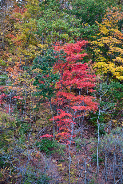 Foliage along the Genesee River.