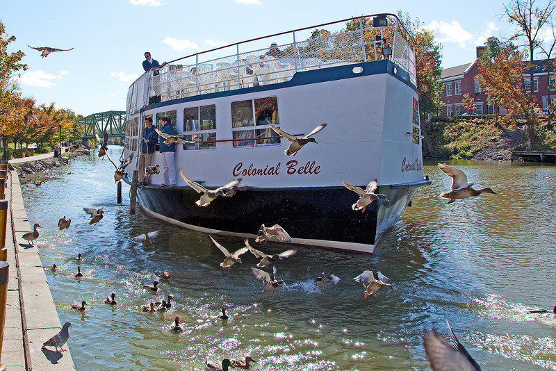 Ducks make way for the Colonial Belle at Pittsford Landing.
