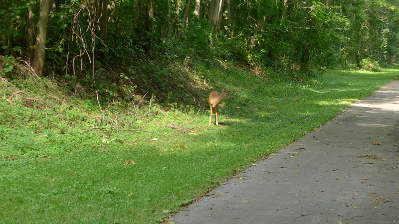 Deer I see while out biking the Canal Path.  taken with my Panasonic LX5