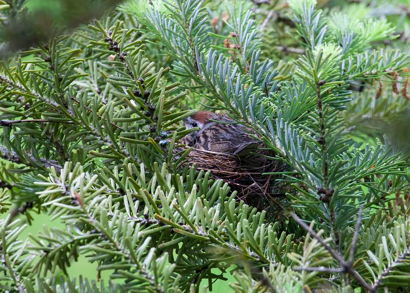 """The Chalet  <a href=""""http://www.chaletbandb.com"""">http://www.chaletbandb.com</a>  Mama bird in nest"""
