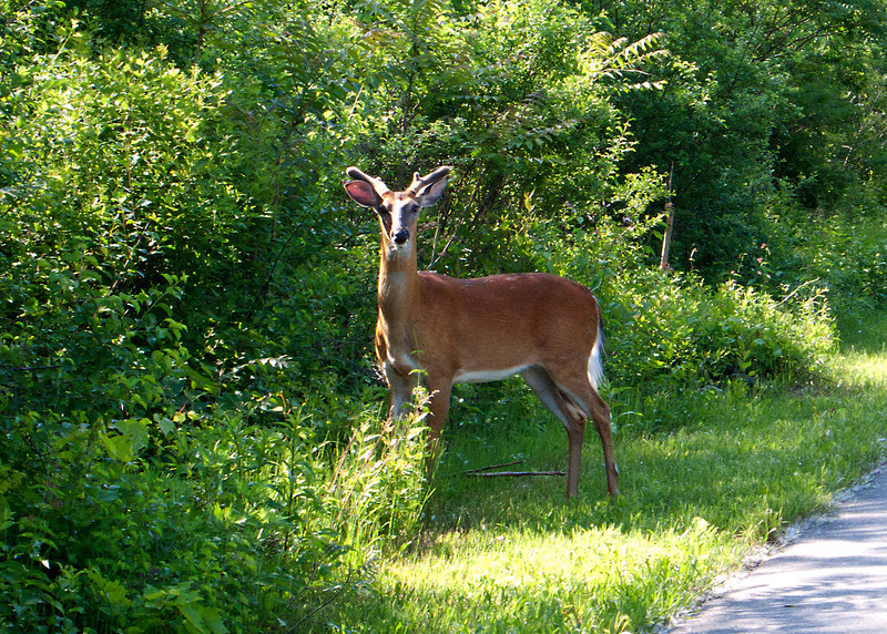 Saw this guy on the Canal Path by Rick's Prime Rib House.  BEAUTIFUL!
