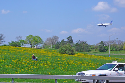 Woman stopped her car to sit in a middle of the dandelion flowers and read a book.   But the sounds of the city remain.