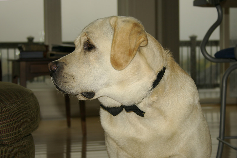 Mika stands up for Daddys wedding.  Has his black tie on.