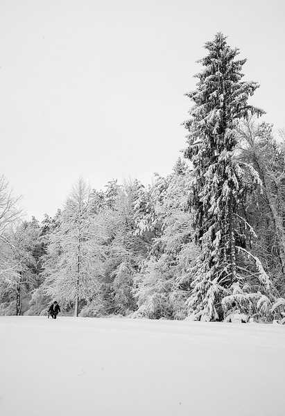 Mendon Ponds Park day after a snow fall.