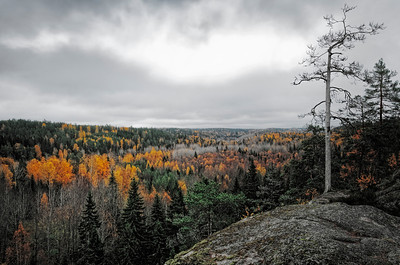 Myllypuronlaakso│Noux national park│Finland