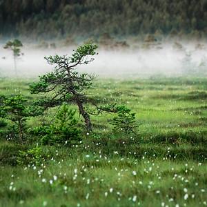 Torronsuo national park│Tammela│Finland