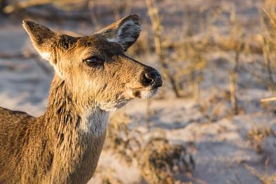 Bambi On The Beach