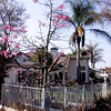 Looking into Back Yard of Neighbor