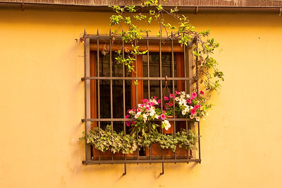 A window in one of the side streets in Florence.