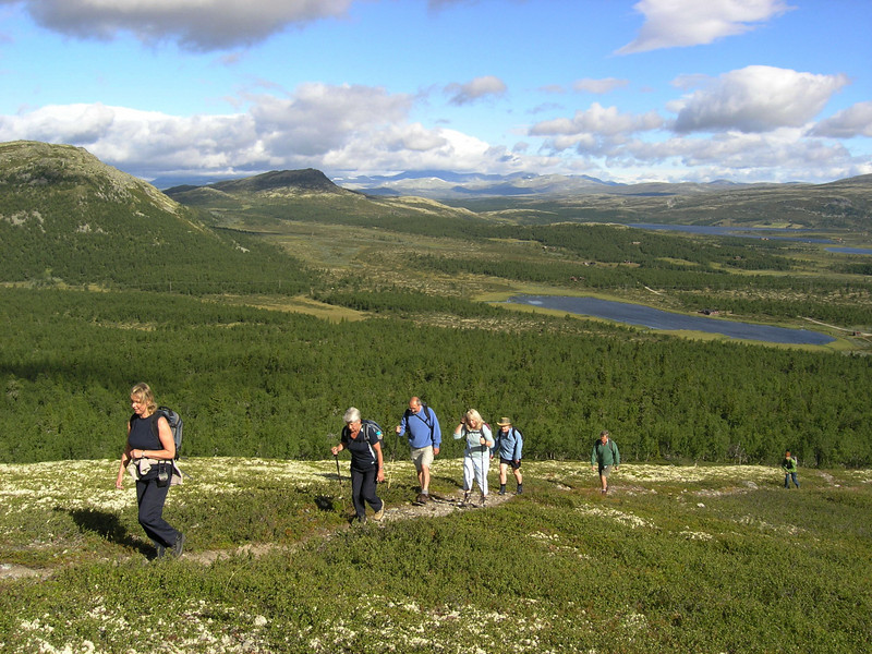 Guided hill walking from Venabu fjell hotel