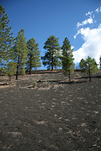 The whole area around Sunset Crater is covered with pea sized basalt gravel.