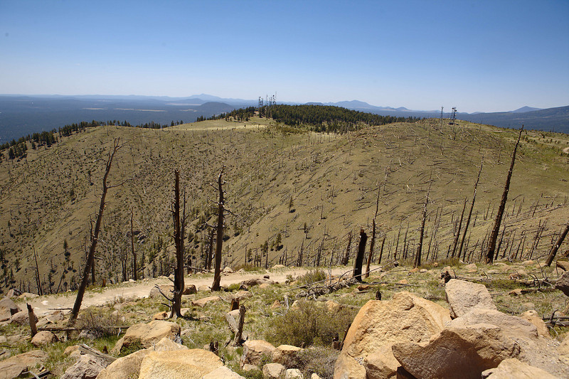 Apparently a forest fire came through here in the late 70s.  I would have thought there would be more regrowth by now.