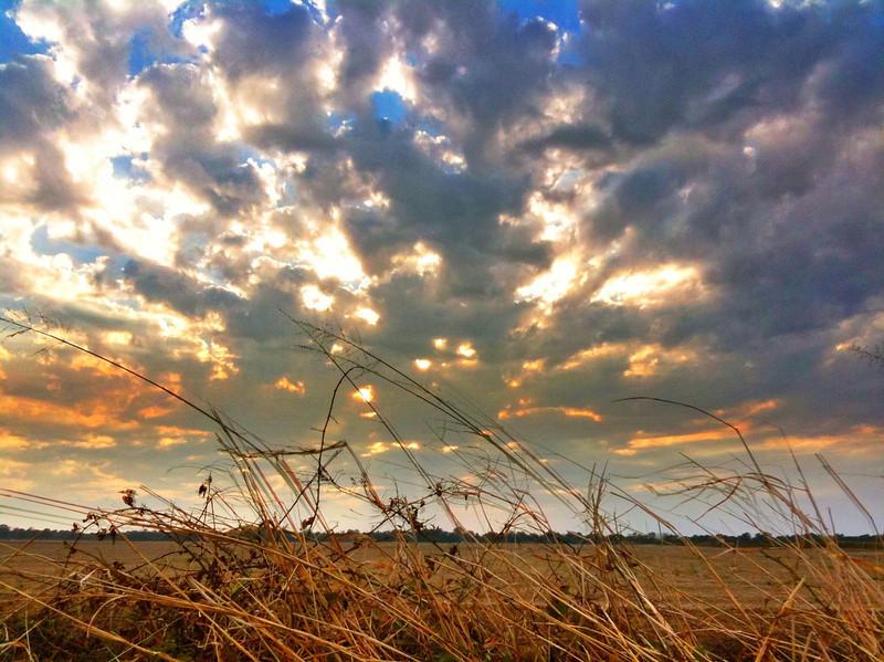 Sunday Sunset in the Dove Field - Tribbett, Mississippi