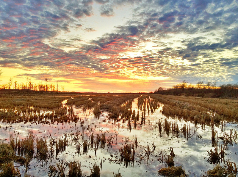 Winter sunset over a rice field - near Baird, Mississippi