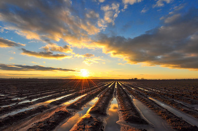 Spring is just around the corner. This beautiful Delta dirt won't be barren for much longer. Like and share if you are ready for Spring!