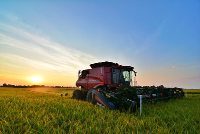 Sunset over rice harvest in the Mississippi Delta - Fioranelli Brothers - near Cleveland, MS - Bolivar County