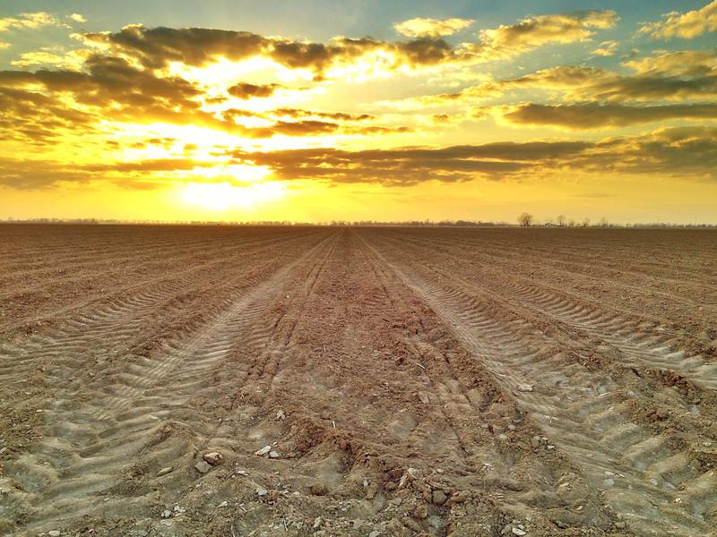 Spring Planting Tracks - Arcola, Mississippi