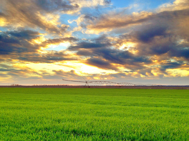 Center Pivot Sunset - Tribbett, Mississippi