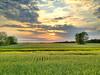 Delta sunset over a field of winter wheat - Tribbett, Mississippi - 4-12-12