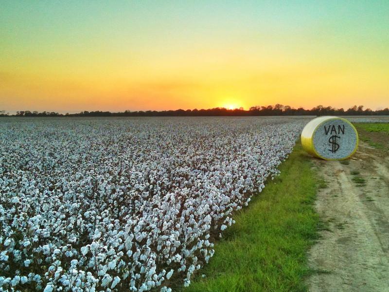 Dollar Cotton - Choctaw, Mississippi