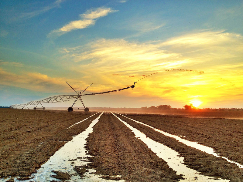 Rollin' sprinkler watering up some soybeans - yesterday in Tribbett, Mississippi