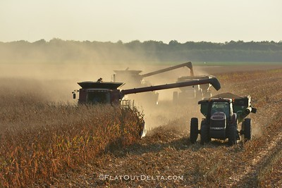 Corn Harvest on Smythe & Sons in Tribbett, MS. Feel free to share!  Follow, keep up and see more photos on instagram.com/johnmontfort  Visit www.flatoutdelta.com for more!