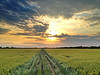 Delta sunset over a field of winter wheat - Tribbett, Mississippi - 4-12-12