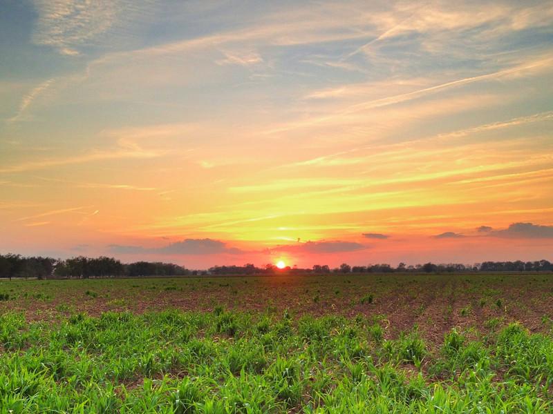 Winter sunset on Fratesi - Leland, Mississippi