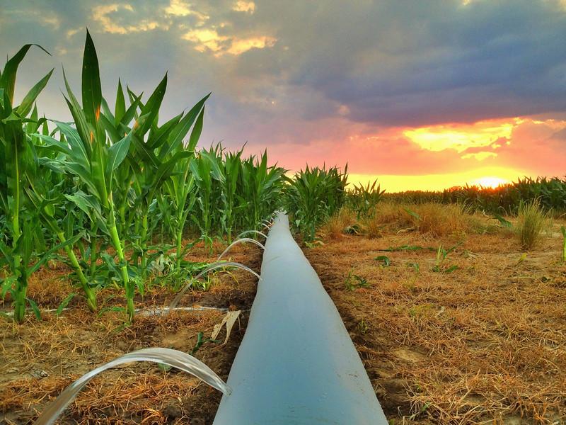 Irrigation on Bourbon Plantation - Elizabeth, MS