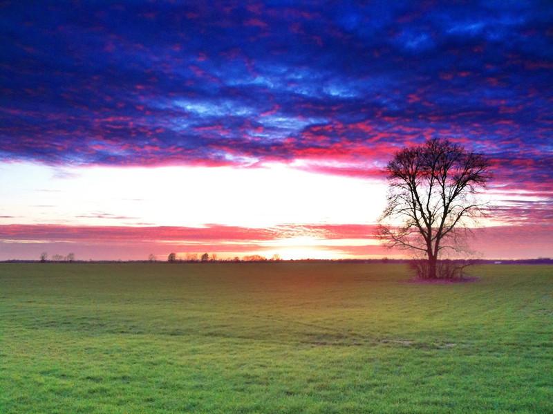 Winter Wheat Sunset - Tribbett, Mississippi