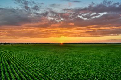 Good Morning! This beautiful summer sunset over a tasseling corn field on Bourbon Plantation was captured last Sunday - near Leland, Mississippi.