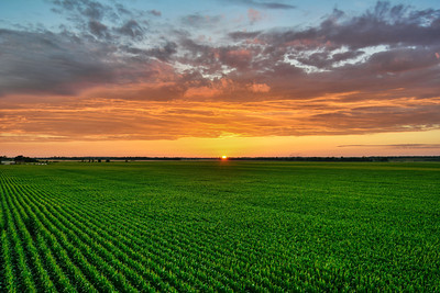 Good Morning! This beautiful summer sunset over a tasseling corn field on Bourbon Plantation was captured last Sunday - near Leland, Mississippi.