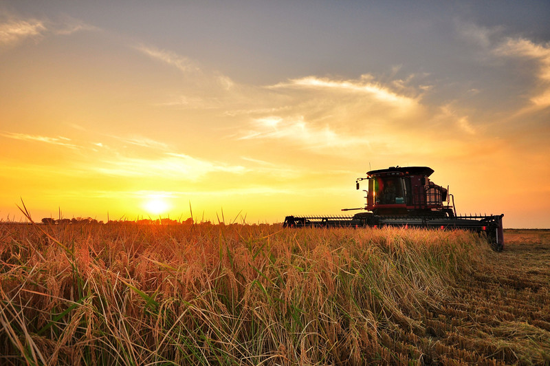 Delta sunset during the rice harvest on Simmons Planting Company - Trail Lake, Mississippi